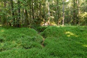 195 Clover Ridge, Angier, NC 27501, USA Photo 12