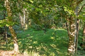 195 Clover Ridge, Angier, NC 27501, USA Photo 11