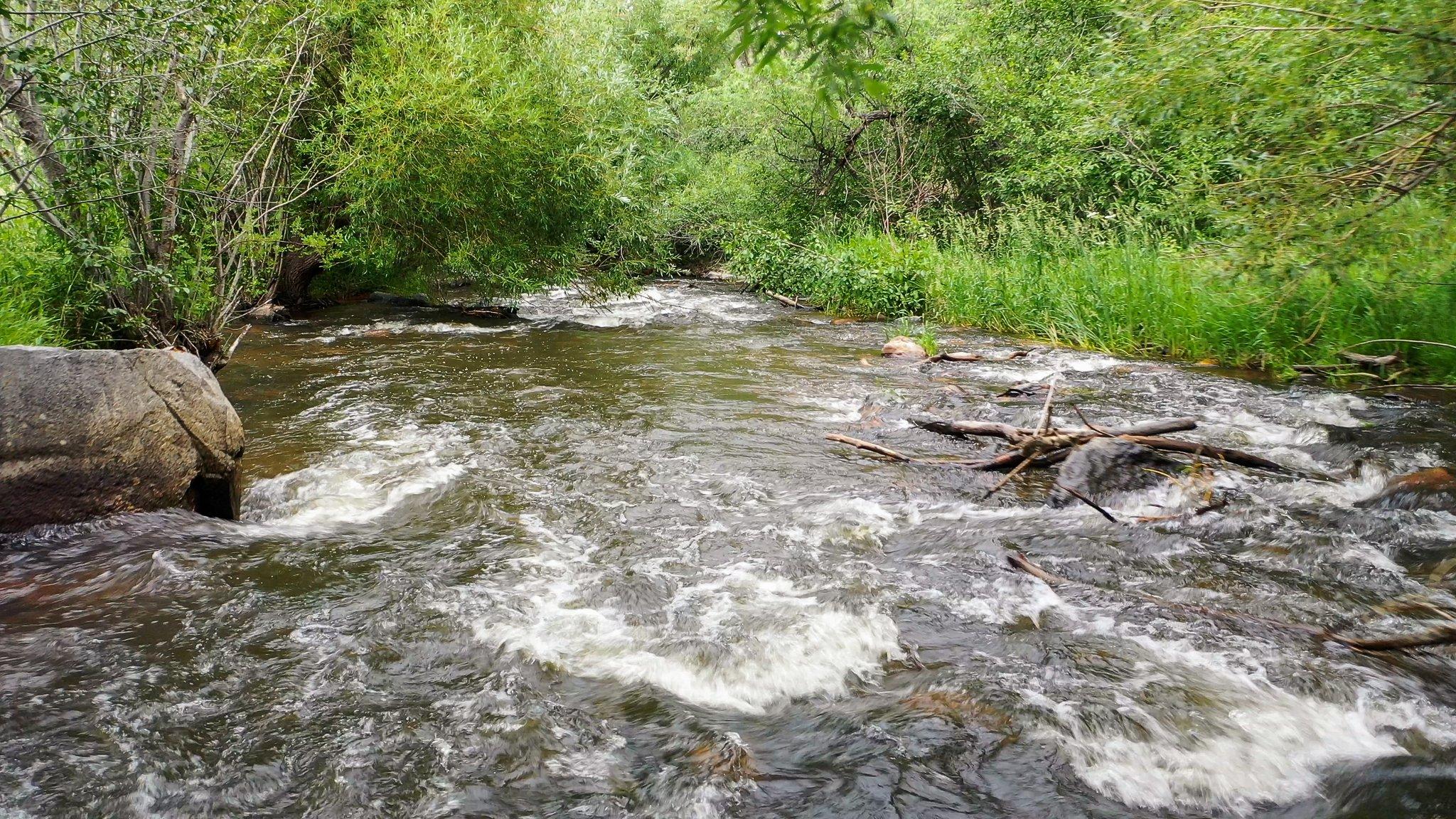 21725 Shady Ln, Idledale, CO 80453, USA Photo 17