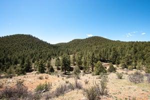 24092 Resort Creek Rd, Pine, CO 80470, US Photo 22